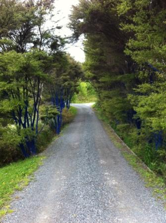 Snells Beach, New Zealand: blue trees