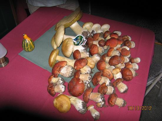 Mushrooms picked while staying at the Matterhorn Inn