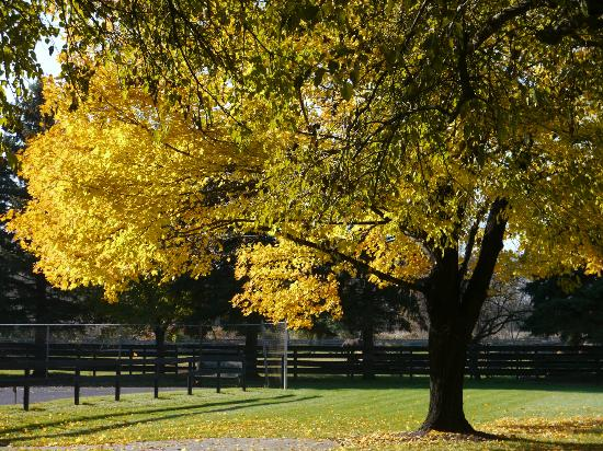 Pheasant Field Bed & Breakfast: Fall in Central Pennsylvania