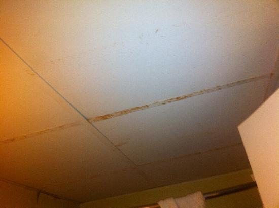 bed bug bites picture of days inn midland midland tripadvisor - Bed Bugs In Bathroom