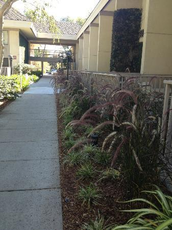 Sheraton Sunnyvale: walkway of the hotel