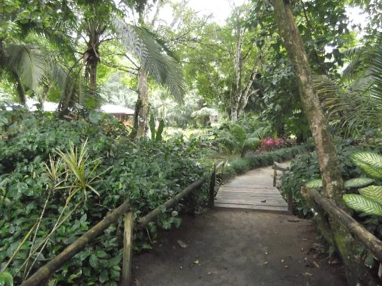 Casa Viva Beach Houses: Pathway to the beach