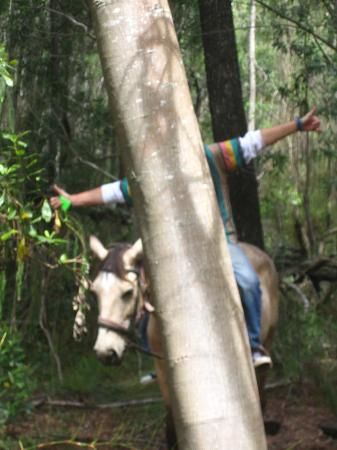 Dijembe Backpackers Hostel: Horseriding