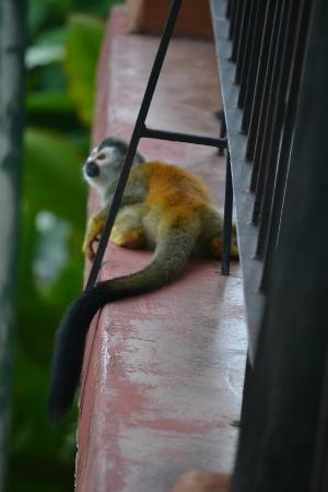 Hotel La Mariposa: Monkeys played on the balcony