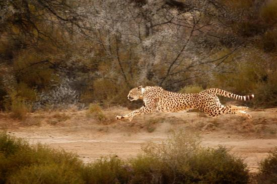 Inverdoorn Game Reserve: Experience the best in Cheetah conservation