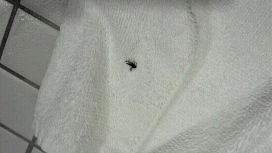 Clarion Hotel Portland Airport: insects in bathroom kept me from sleeping.
