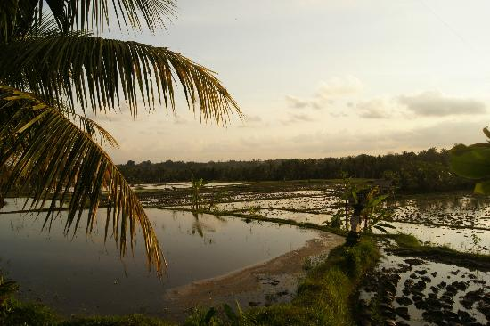 Omah Apik: View on the rice fields