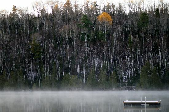 Bearskin Lodge: Most of the foliage was gone except for 1 lone tree
