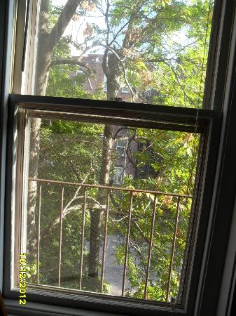 Copley House: View from one window with birds on the trees