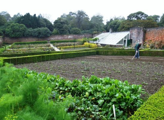 Victorian Vegetable Garden Picture of St Austell