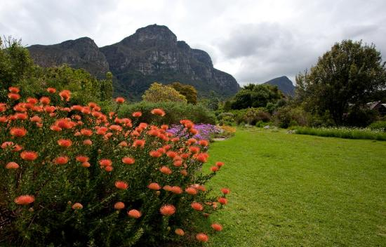 The Twelve Apostles Hotel and Spa: Kirstenbosch Botanical Gardens in Cape Town