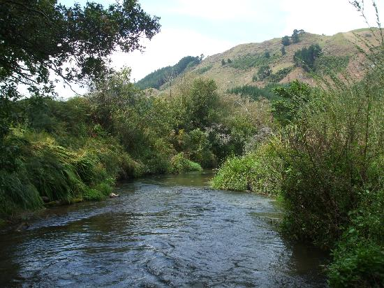 Ngongotaha Lakeside Lodge: Plenty of trout in this stream,just gotta catch em