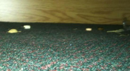 Super 8 Kingston Motel: food crumbs and nutshells at front edge of dresser