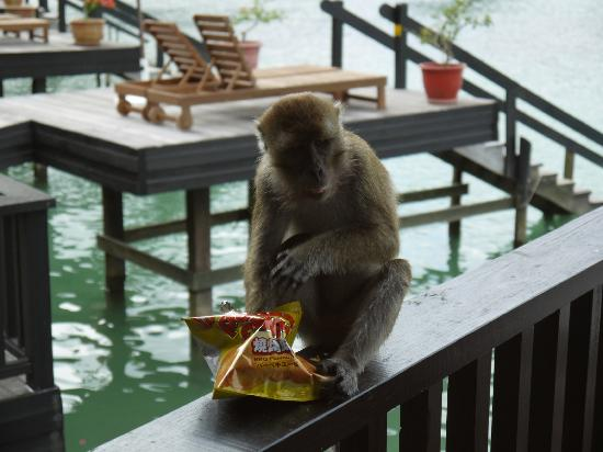 Pulau Gaya, Malezja: Monkey stole my potato chips from the room