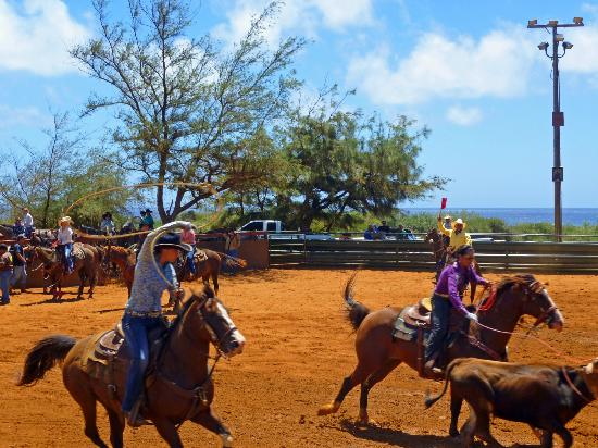 Poipu Plantation Resort: CJM stables nearby