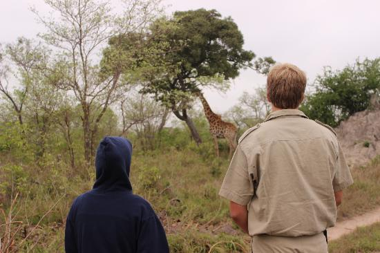 andBeyond Leadwood Lodge: walk the giraffes