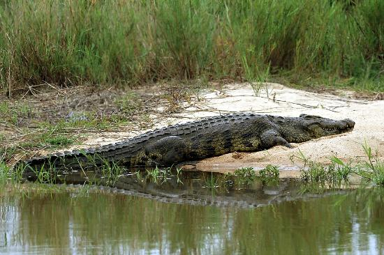 Savanna Private Game Reserve: Crocodile crossing