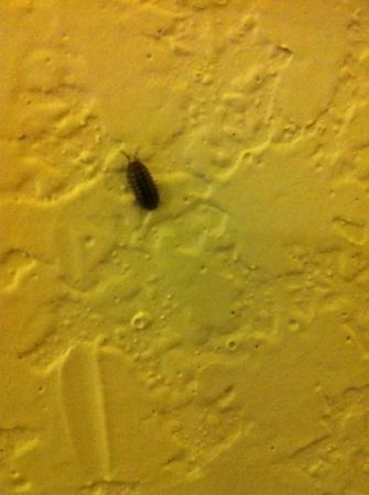 Hawthorn Suites by Wyndham Hartford Meriden: yuk...so called water bug...whatever