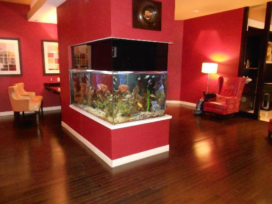 Fairview Park Marriott: Aquarium in lobby