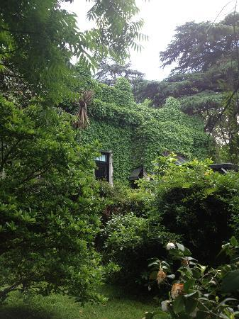 Teresita Bed &amp; Breakfast : Cool house nextdoor covered in ivy