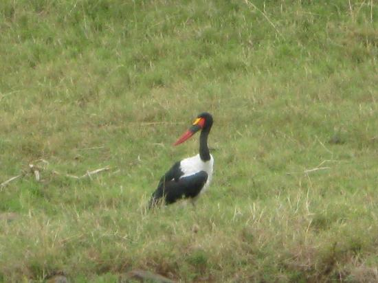 Nairobi National Park: Curious bird, isn&#39;t?