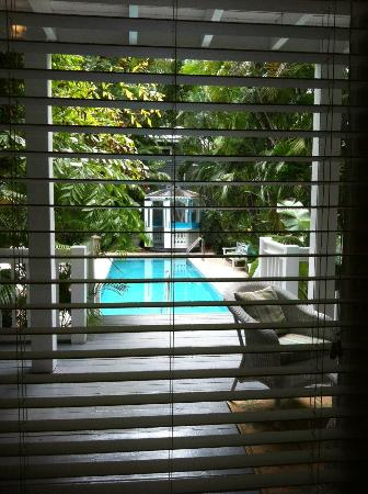 Ambrosia Key West Tropical Lodging: View of pool from inside the alligator room.