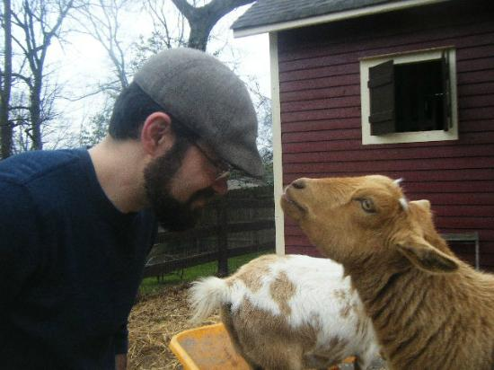 The Social Goat Bed & Breakfast: Sherman trying to get a nibble