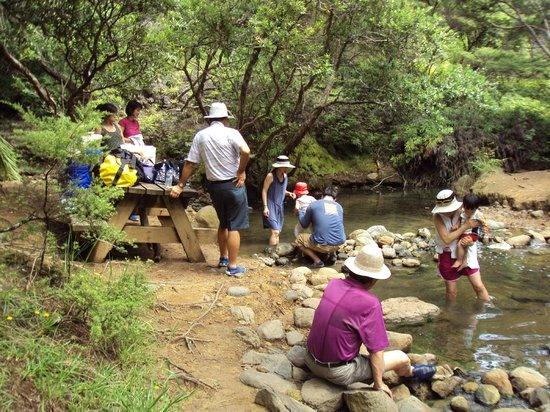 Go Great Barrier Island - Day Tours: Kaitoke Hot Springs