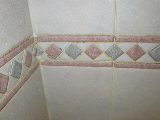 Hotel Due Torri: Was nice looking tiles, but dirty and moldy! I forgot to take a photo of the filthy drain with h
