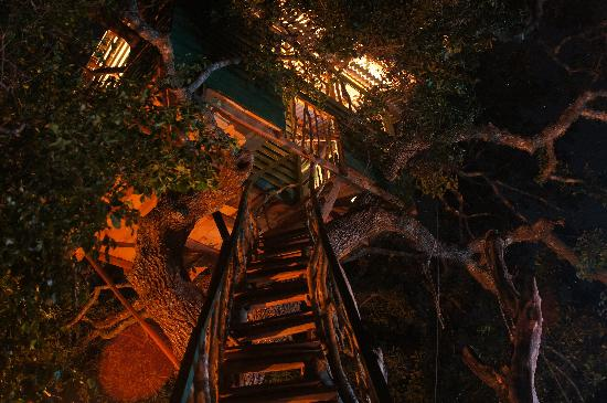 Yala Tree House Safari