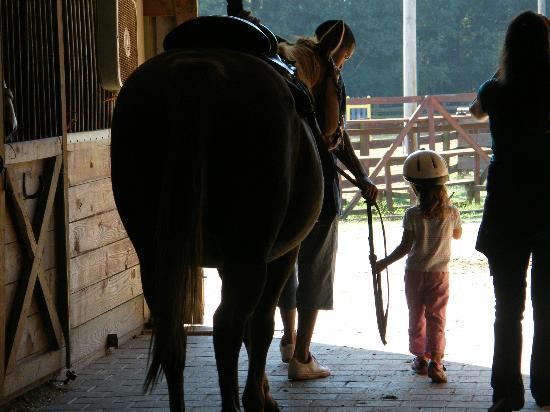 Southern Cross Ranch: gentle horses