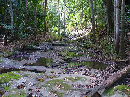 Narrows Escape Rainforest Retreat: Creek flowing behind Kookaburra (and other cabins)