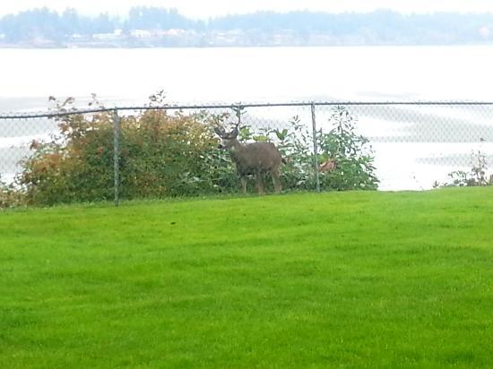 Madrona Beach Resort: Ocean view and the deer