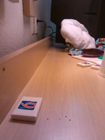 Motel 6 Corpus Christi Northwest: alot of roaches