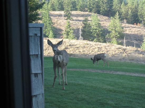 Sun Mountain Lodge Deer October 2012