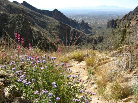 Lodge at Ventana Canyon: Ventana Canyon trail about a mile or so from hotel