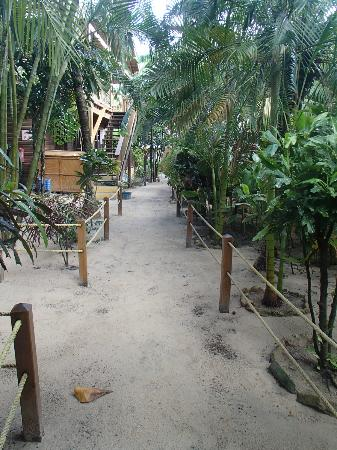 Bananarama Beach and Dive Resort: Walking through the grounds of the resort.