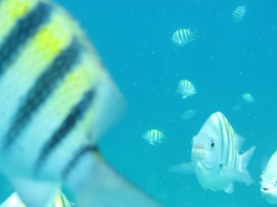 Point Pleasant Resort: Some of the fish while snorkeling.