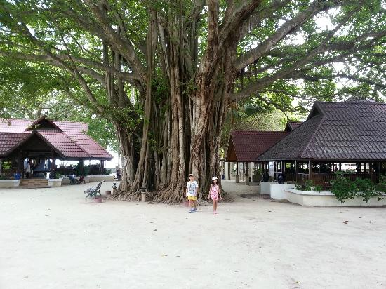 Club Med Kani: Banyan tree, center of the hotel