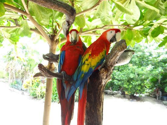 Petit Lafitte: Parrots at the sanctuary