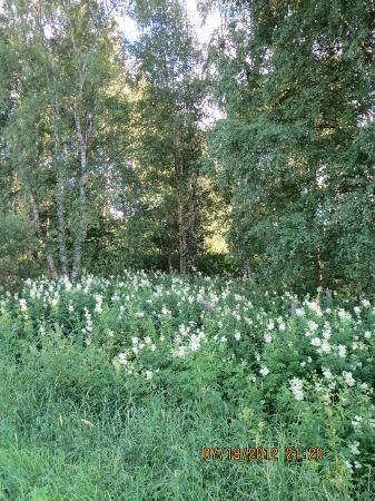 Hameenkyla Manor (Kartano): Wildflowers