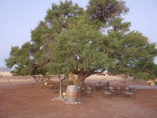 Sossusvlei Lodge: Relaxing under a tree.... for everything else theres Mastercard