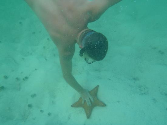 Green Turtle Cay: Huge starfish all over the white sandy areas of GTC