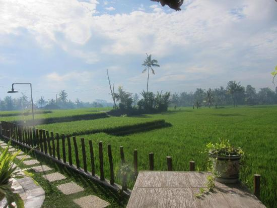 By Dorry Bed & Breakfast: It's literally in the middle of a rice field