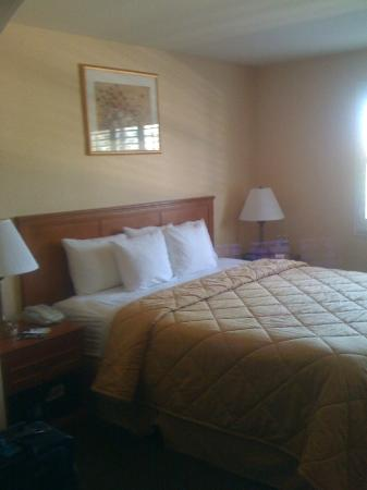 Comfort Inn & Suites near Long Beach Convention Center: King bed.