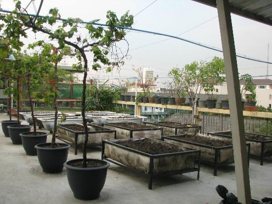Phra-Nakorn Norn-Len Hotel: The garden in recycled bathtubs