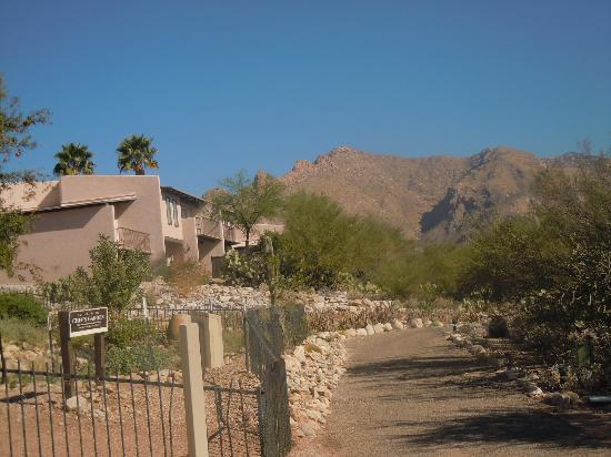 Catalina Mountains Picture Of Westward Look Wyndham Grand Resort And Spa Tucson Tripadvisor