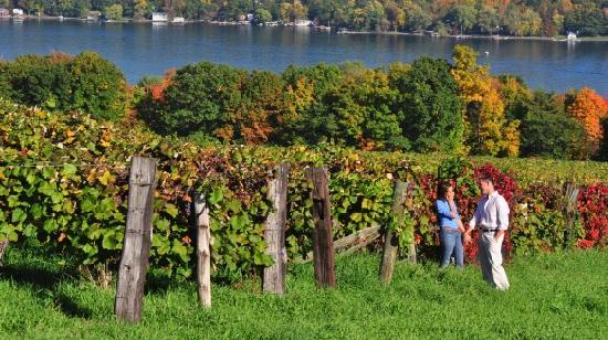 Finger Lakes Wine Country Region, État de New York : Enjoy a walk among the vineyards