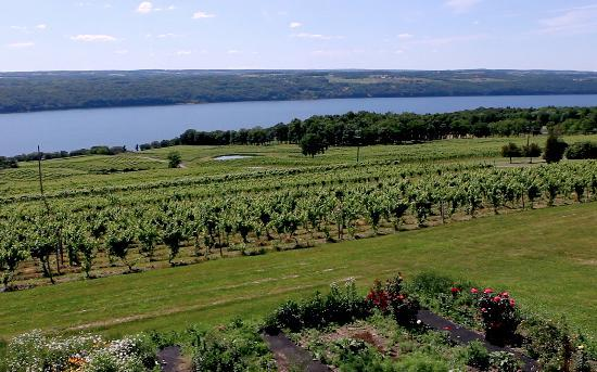 Finger Lakes Wine Country Region, NY: Marvel at the stunning landscapes along the wine trail