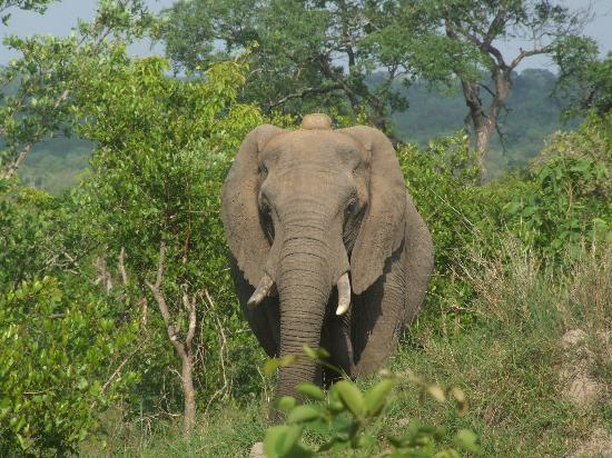 andBeyond Leadwood Lodge: Our first Elephant